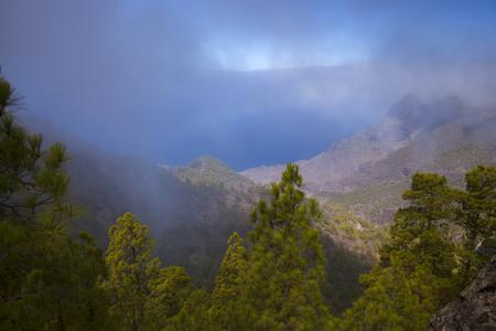 Gran Canaria,  nature park pine forest Tamadaba, view down Barranco del Vaquero ravine