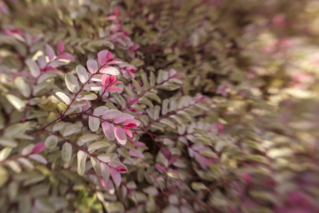 floral background with fly-in effect - variegated leaves of an ornamental bush Banco de Imagens