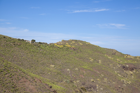 Gran Canaria, January, views from hiking path La Ruta Del Cartero, Postman route, between Risco de Agaete and La Aldea de San Nicolas, clusters of light green spurge Euphorbia canariensis, floral symbol of Gran Canaria Stok Fotoğraf