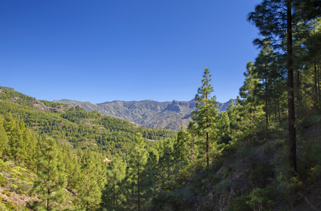 Gran Canaria,  February, hiking path from Artenara to plateau Mesa de Acusa, reforested areas