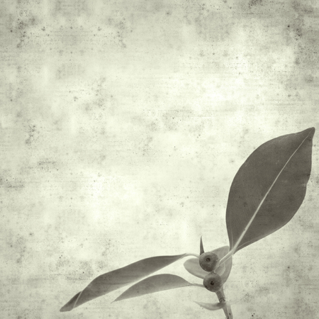 textured stylish old paper background, square, with Chinese banyan twig 版權商用圖片