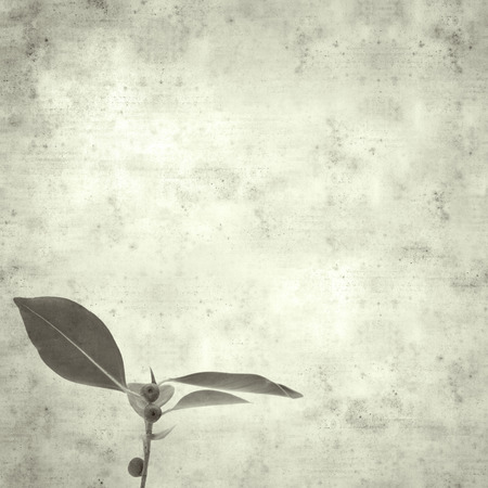 textured stylish old paper background, square, with Chinese banyan twig Archivio Fotografico