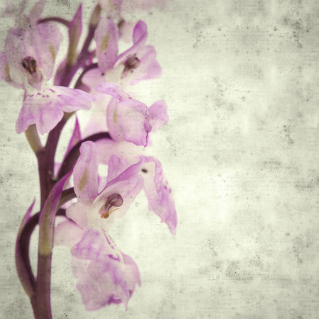 textured stylish old paper background, square, with  Orchis patens subspecies canariensis Imagens - 118953384