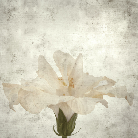 textured stylish old paper background, square, with pale hibiscus flower