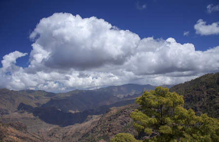 Gran Canaria, March, Landscapes of strict nature reserve Inagua, Canarian Pine trees