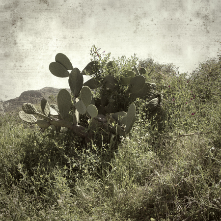 textured stylish old paper background, square, with landscape of Gran Canaria Фото со стока