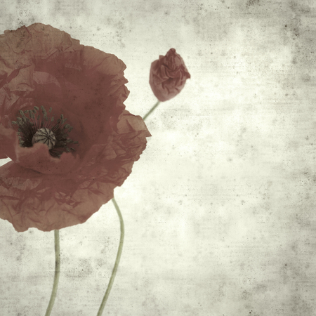 textured stylish old paper background, square, with red poppy 免版税图像