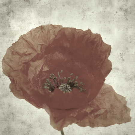 textured stylish old paper background, square, with red poppy Фото со стока