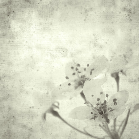 textured stylish old paper background, square, with spring blossoms Фото со стока