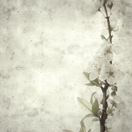 textured stylish old paper background, square, with spring blossoms