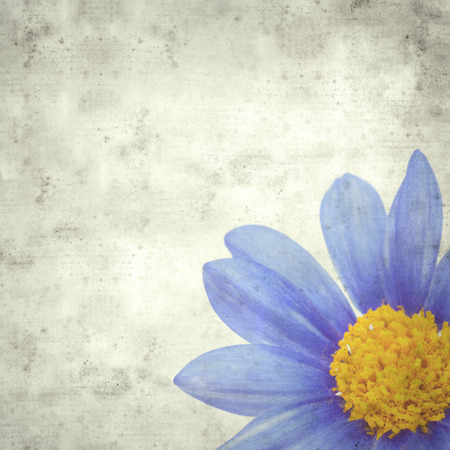 textured stylish old paper background, square, with blue daisy bush flowers