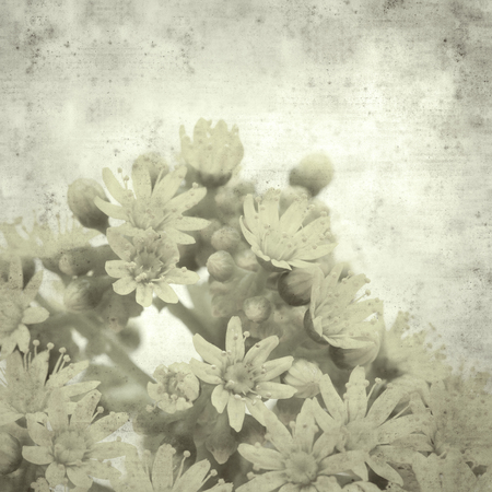 textured stylish old paper background, square, with Aeonium flowers