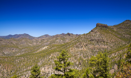 Gran Canaria, Pilancones Natural Park, reforested slopes, Canary pine