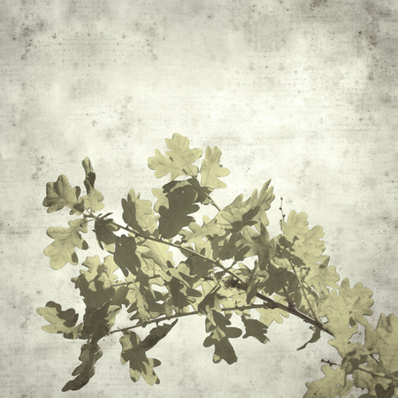 textured stylish old paper background, square, with young oak leaves