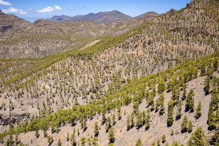 Gran Canaria, Parco Naturale di Pilancones, pendii rimboschiti, pino canario