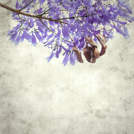 textured stylish old paper background, square, with lilac jacaranda flowers