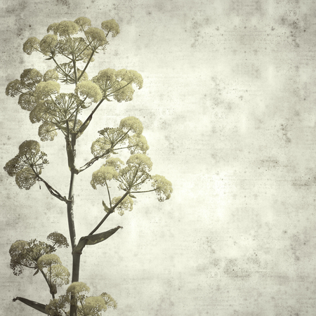 textured stylish old paper background, square, with  Ferula linkii, Giant Canary Fennel flowers Stok Fotoğraf - 122983152