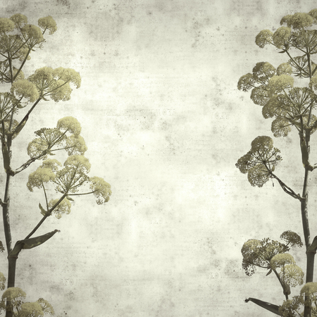 textured stylish old paper background, square, with  Ferula linkii, Giant Canary Fennel flowers
