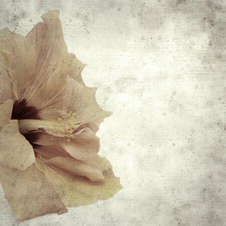 Textured elegante vecchio sfondo di carta, quadrato, con fiore di ibisco arancione pallido Archivio Fotografico