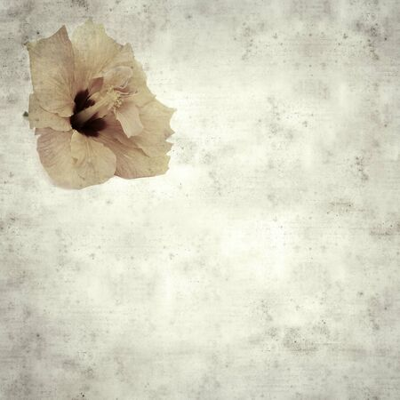 textured stylish old paper background, square, with pale orange hibiscus flower