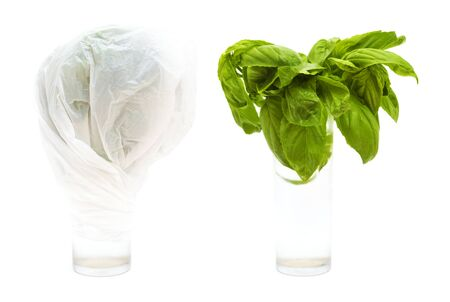 Kitchen trick- keep cut herbs fresh in water under tightly wrapped plastic bag inside your fridge, cut stems of sweet basil in a glass isolated on white background