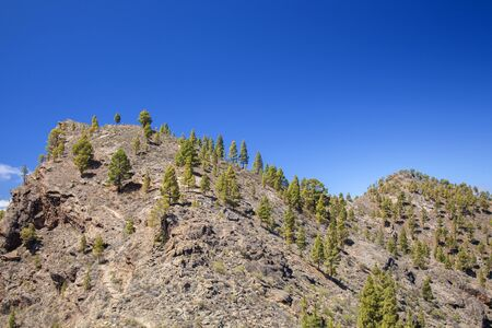 Gran Canaria, June, Nature Park Pajonales, reforested areas 스톡 콘텐츠