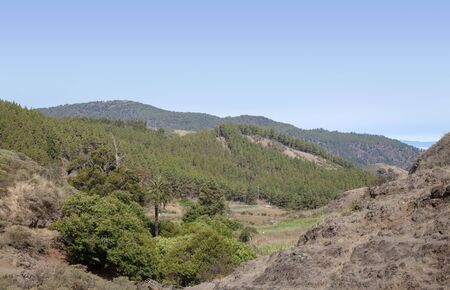 Gran Canaria, July, northern areas of the island, Anaga mountains on Tenerife visible over treetops