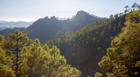 Gran Canaria, July, view over sparse pine forest of nature park Pilancones, afternoon light 스톡 콘텐츠