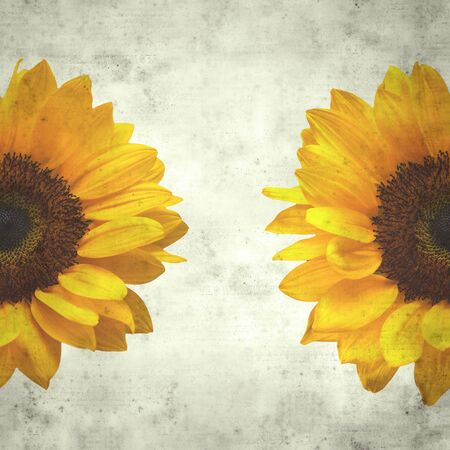 textured stylish old paper background, square, with large sunflower flowerhead