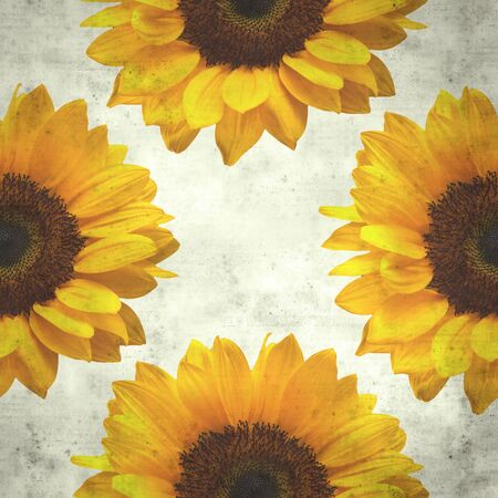 textured stylish old paper background, square, with large sunflower flowerhead Stock fotó - 129790566