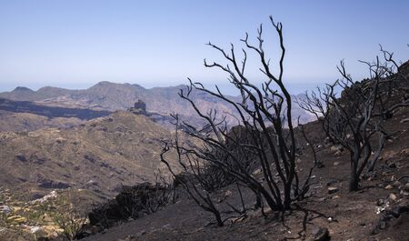 Gran Canaria after wild fire of August 2019, walking route La Cruz de Tejeda - Artenara,  burnt retama bushes, iconic rock formation Roque Bentayga in far distance Reklamní fotografie