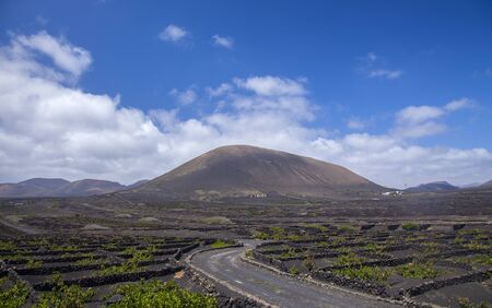Lanzarote, La Geria vineyards with their characteristic pattern of vines growing in small manmade craters protected by low walls 写真素材 - 129965805