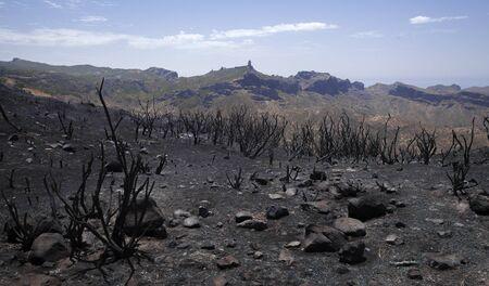 Gran Canaria after wild fire of August 2019, walking route La Cruz de Tejeda - Artenara,  burnt retama bushes, iconic rock formation Roque Nublo in far distance Reklamní fotografie
