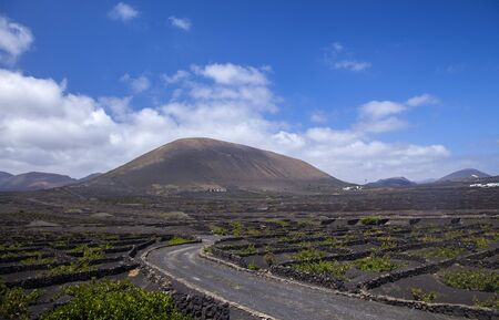 Lanzarote, La Geria vineyards with their characteristic pattern of vines growing in small manmade craters protected by low walls