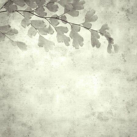 textured stylish old paper background, square, with Adiantum capillus-veneris, black maidenhair fern Фото со стока