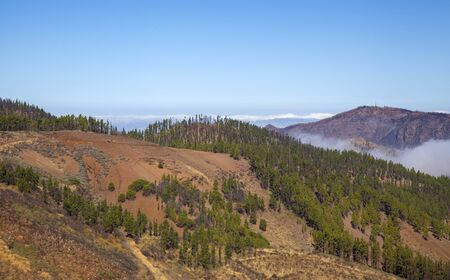 Gran Canaria, October, aerial view Canary Pines recovering after a wildfire two years ago