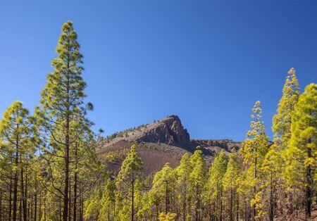 Tenerife,  south-central municipality Vilaflor, Mount Guajara - Villaflor hike, volcanic  landscapes