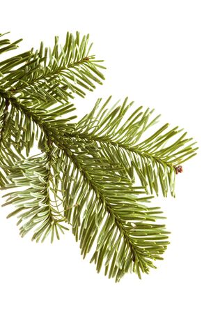 branch of noble fir, Abies procera, isolated on white background