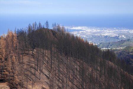 Gran Canaria, November 2019, zone Fuente Fria three months after wildfire, Las Palmas in far distance