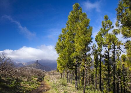 Gran Canaria, December, relatively wet season, hiking path in the mountains, iconic Roque Bentayga right ahead