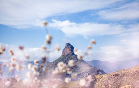 Gran Canaria, January, iconic rock Formation Roque Bentayga visible through branchs of flowering almond tree Stock Photo