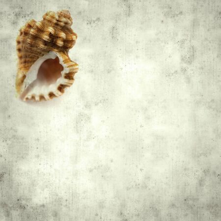 textured stylish old paper background, square, with sea snail  shell 版權商用圖片