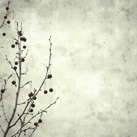 textured stylish old paper background, square, with plane tree winter branches 版權商用圖片