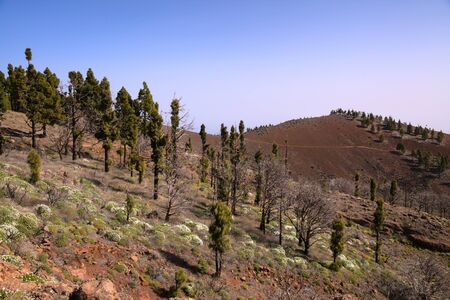 Gran Canaria, Las Cumbres, the highest areas of the island