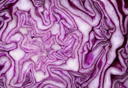 Red Cabbage cut, with inner patterns of folded leaves visible