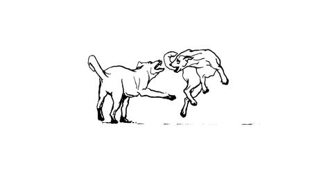 perros jugando: perros salvajes que juegan Vectores
