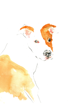 stafford: Hand painting watercolor little Stafford dog