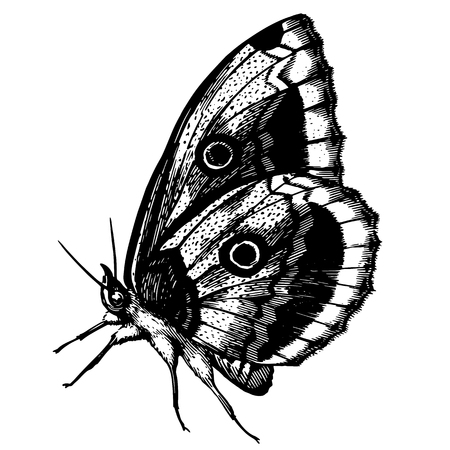 Sketch of a beautiful butterfly Illustration