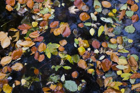 Autumn and fall colorful leaves in water, shadows and lights, yellow, reg, orange and green colors in nature background, Trakai, Lithuania.