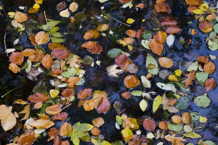 Autumn and fall colorful leaves in water, shadows and lights, yellow, reg, orange and green colors in nature background, Trakai, Lithuania. Stock fotó